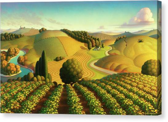 Rolling Hills Canvas Print - Midwest Vineyard by Robin Moline