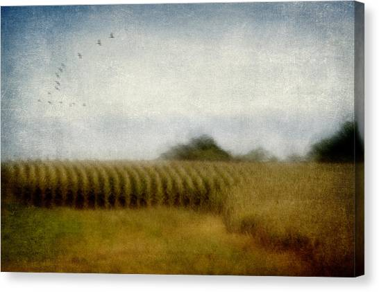 Soft Focus Canvas Print - Midwestern Drive-by Corn Fields by Carol Leigh