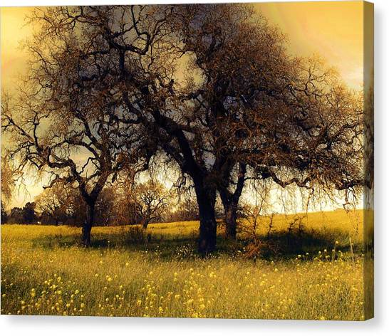 Might Oak Canvas Print