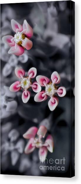 Milkweed Snowflakes Canvas Print