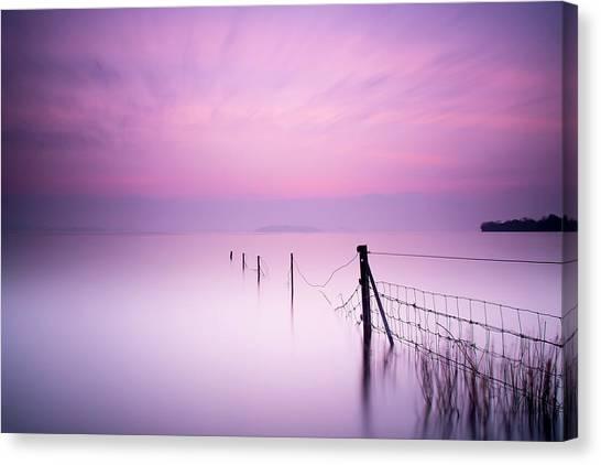 Colour Canvas Print - Milky Pink by Kieran O Mahony