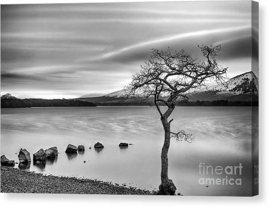 Ansel Adams Canvas Print - Millarochy Bay Loch Lomond  by John Farnan