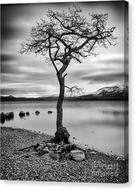 Ansel Adams Canvas Print - Millarochy Tree Loch Lomond by John Farnan