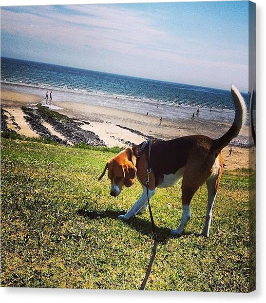 Beagles Canvas Print - Milo Loves A Bit Of Fun In The Sun by Laura Baddeley