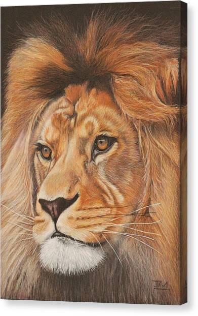 Canvas Print - Milo - The Barbary Lion by Jill Parry