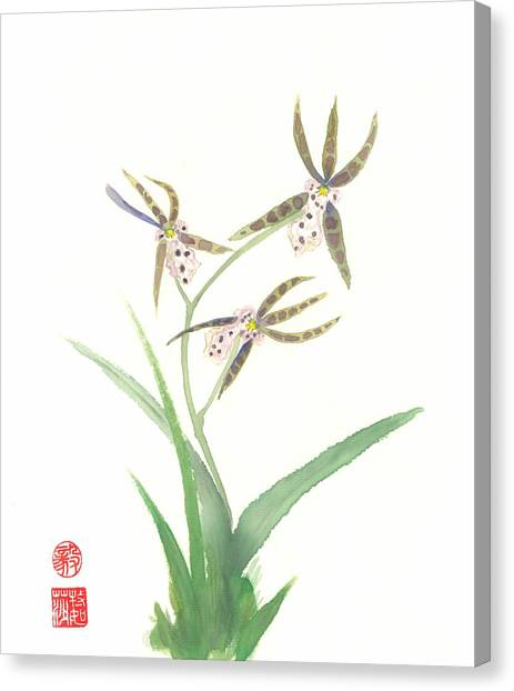 Miltonia Orchid Canvas Print
