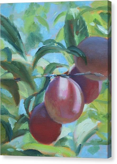 Mimi's Plums Canvas Print