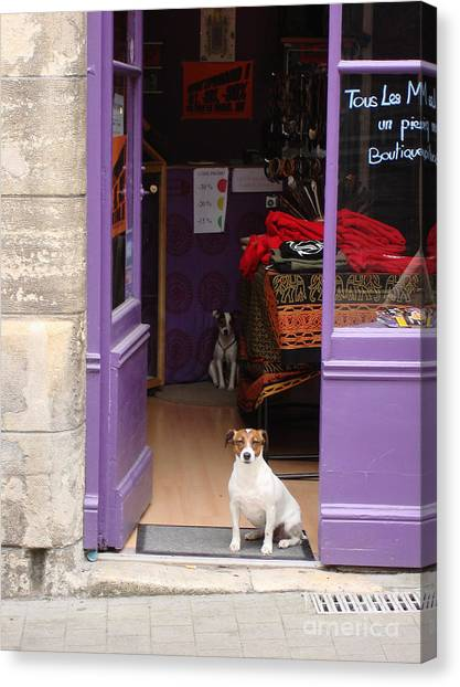Minding The Shop. Two French Dogs In Boutique Canvas Print