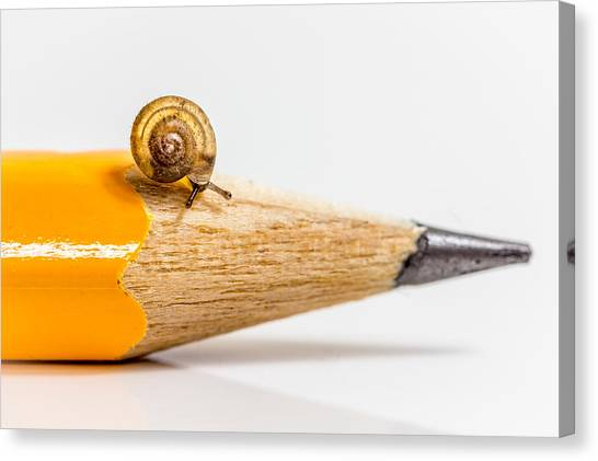 Mini Snail. Canvas Print