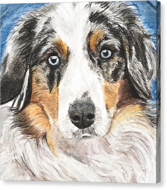 Miniature Australian Shepherd Canvas Print