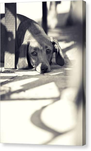 Doggy Canvas Print - Miniature Dachshund  by Samuel Whitton