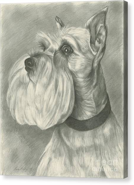 Miniature Schnauzer Canvas Print