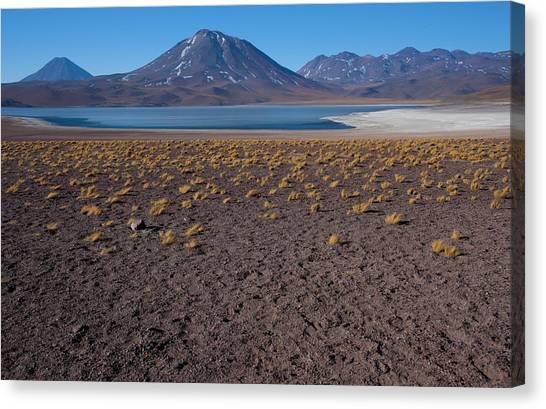 Atacama Desert Canvas Print - Miniques Lake Is A Brackish Water Lake by Mallorie Ostrowitz