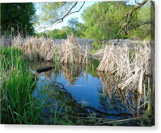 Marsh Grass Canvas Print - Minnesota Wetland by Jim Hughes