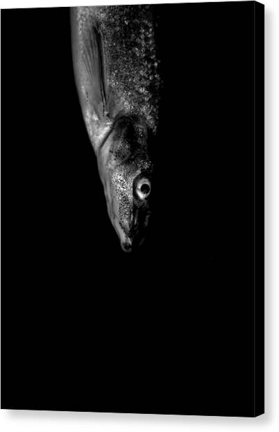 Minnow Canvas Print