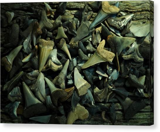 Shark Teeth Canvas Print - Miocene Fossil Shark Tooth Assortment by Rebecca Sherman