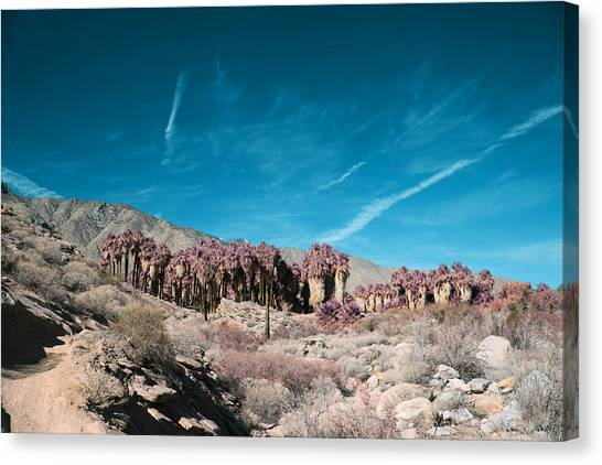 Oasis Canvas Print - Mirage by Laurie Search