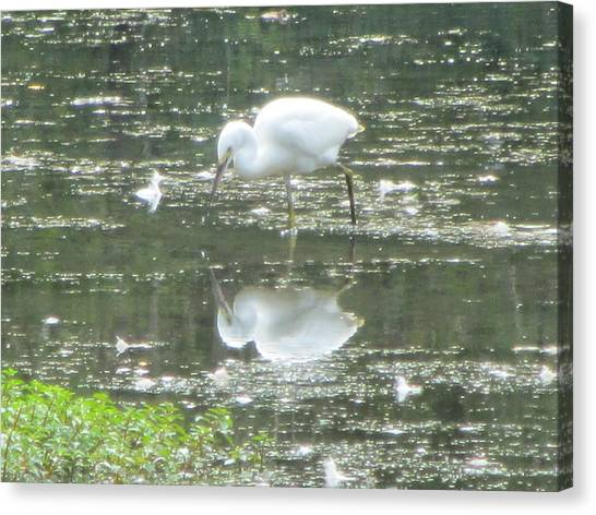 Mirror Image Of The Snowy Egret Canvas Print by Debbie Nester