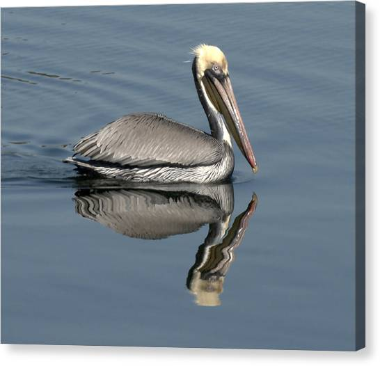 Mirror Pelican Canvas Print