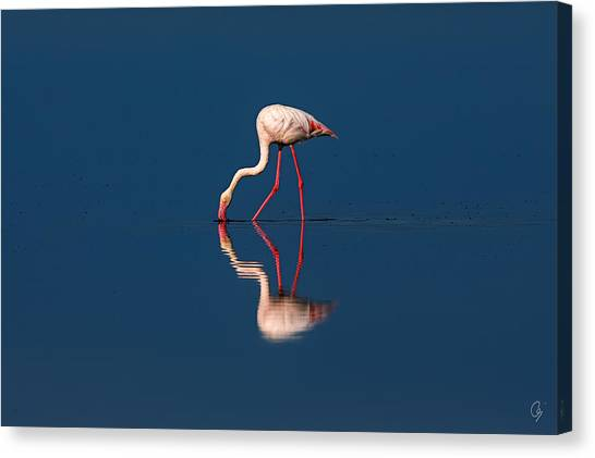 Mirrored Solitaire Canvas Print by Jeppsson Photography
