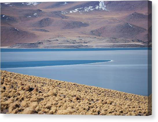 Atacama Desert Canvas Print - Miscanti Lake Is A Brackish Water Lake by Mallorie Ostrowitz