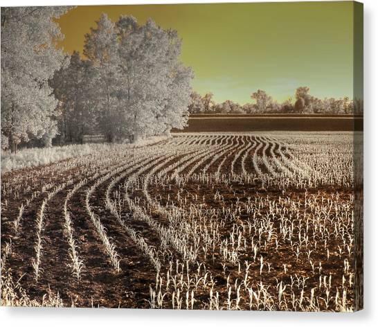 Corn Field Canvas Print - Missouri Corn Field by Jane Linders