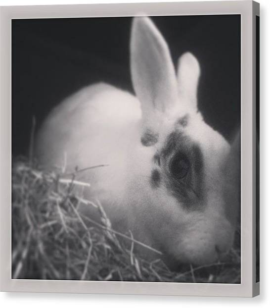 Anniversary Canvas Print - #missyou #baby #boy #mervi #bunny by Boo Mason