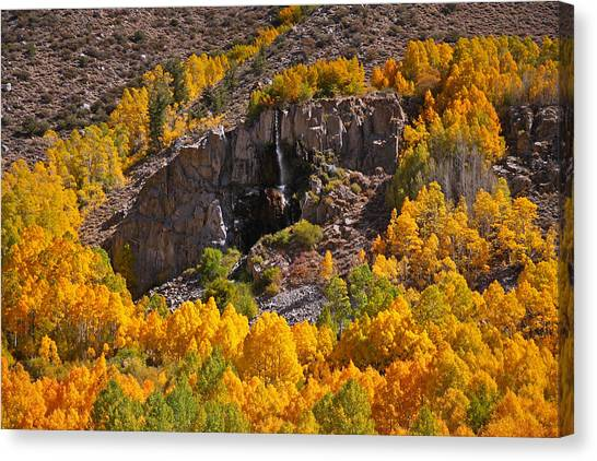 Mist Falls And Aspen In Autumn Canvas Print