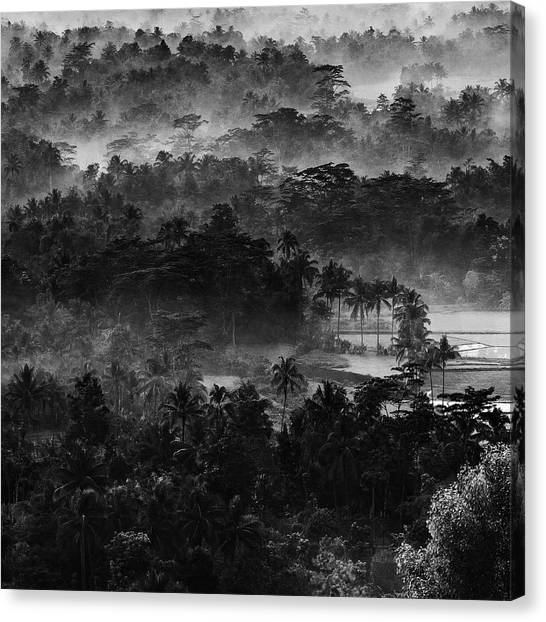 Jungles Canvas Print - .....mist In The Morning..... by Johanes Januar