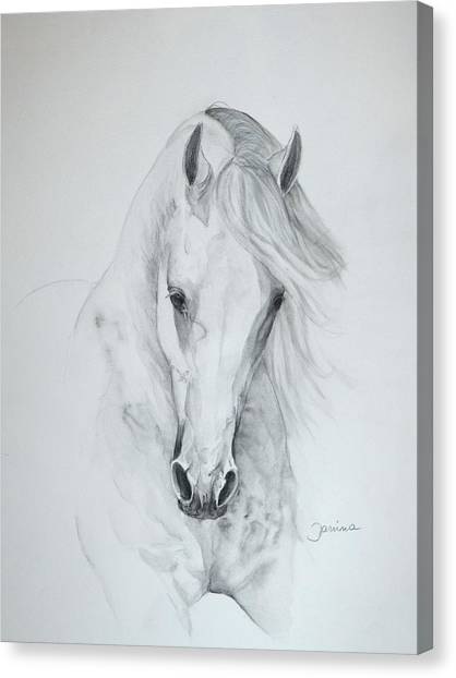 Misterioso 2 Canvas Print by Janina  Suuronen