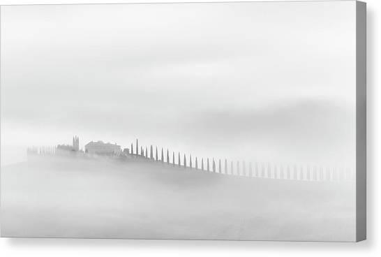 Cypress Canvas Print - Mist(ery) by Usha Peddamatham