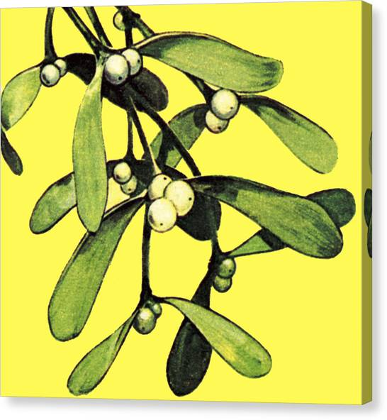 Mistletoe Canvas Print - Mistletoe by English School