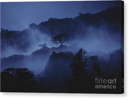 Monteverde Canvas Print - Misty Cloud Forest At Dusk by Gregory G Dimijian MD