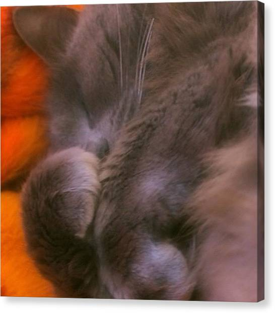 Kittens Canvas Print - Misty Curling Up For A Nap! #alemy by Joann Vitali