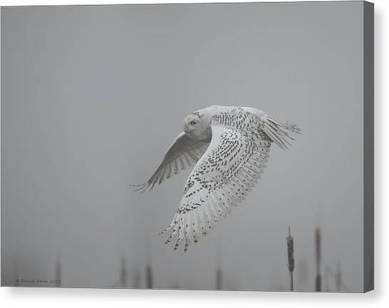 Misty Day Snowy Canvas Print