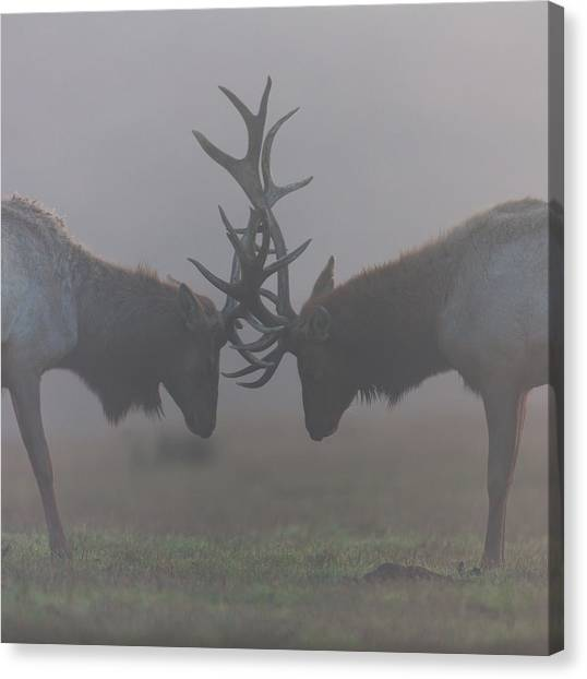 Misty Encounter Canvas Print