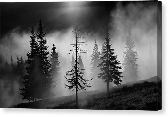 Fir Trees Canvas Print - Misty Forest by Julien Oncete