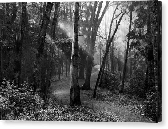 Scenic Canvas Print - Misty Forest Trail by Leland D Howard