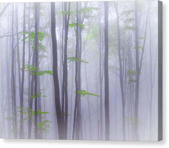 Foggy Forests Canvas Print - Misty by Michel Manzoni