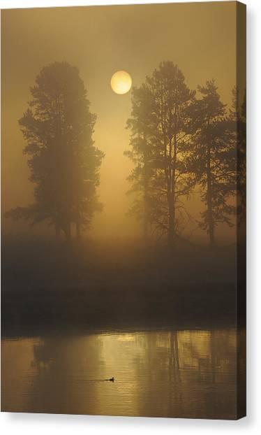 Misty Morning I Canvas Print by Sandy Sisti