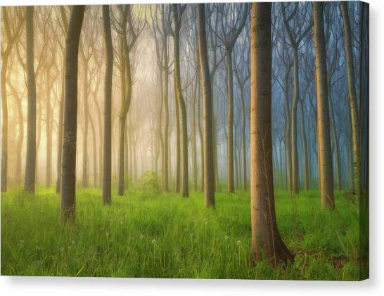 Foggy Forests Canvas Print - Misty Morning by Jingshu Zhu