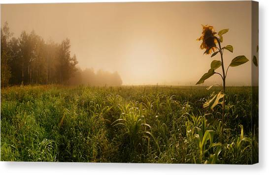 Russia Canvas Print - Misty Morning by Julia Shepeleva