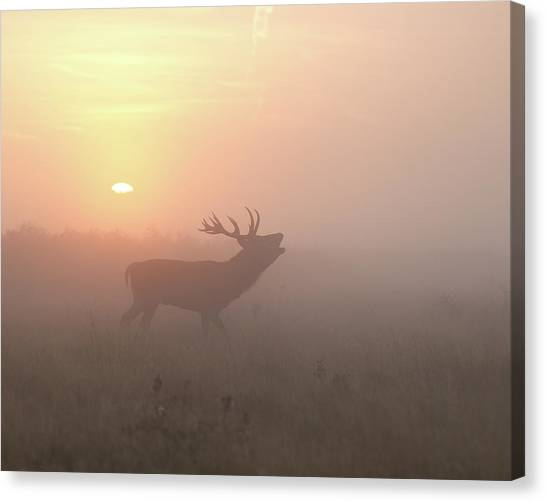 Stag Canvas Print - Misty Morning Stag by Greg Morgan