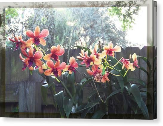 Misty Orchids Canvas Print
