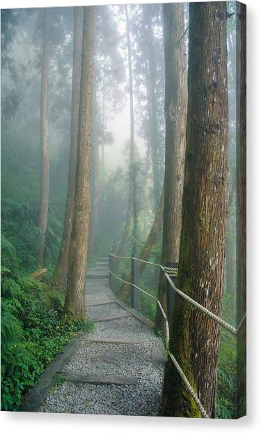 Misty Trail Canvas Print