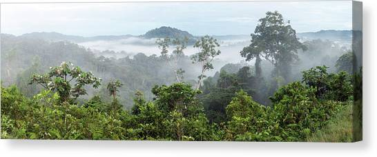 Ecuadorian Canvas Print - Misty Tropical Rainforest by Dr Morley Read
