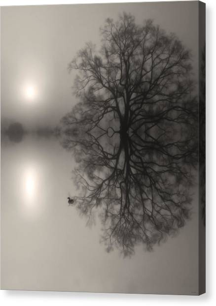 Misty Water Oak Canvas Print