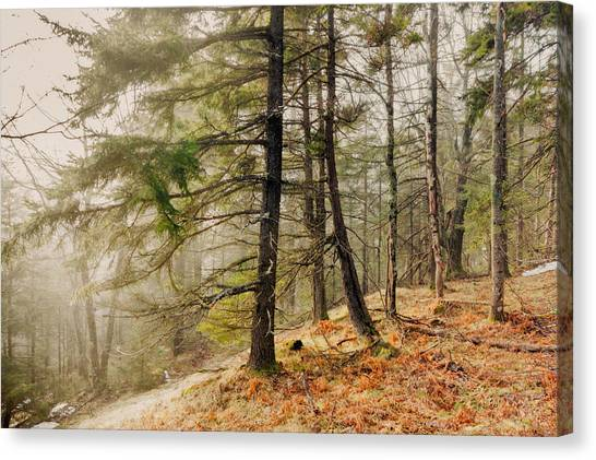 Misty Woodland Canvas Print by Robert Clifford