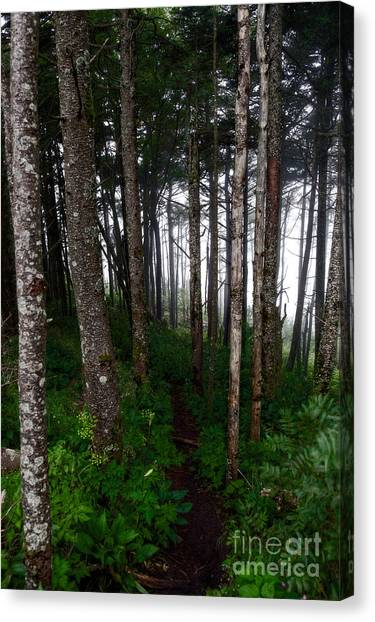 Misty Woods At Mt. Mitchell Canvas Print