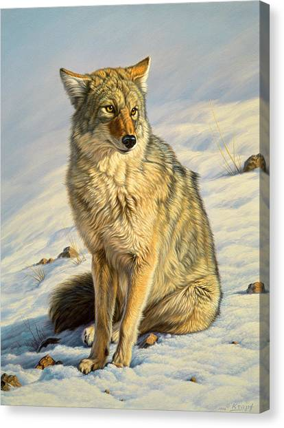 Yellowstone Canvas Print - Misunderstood by Paul Krapf
